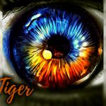 Eye of the Tiger - Rough Trade 2020